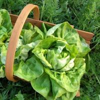 Rok se zahradníkem – červenec