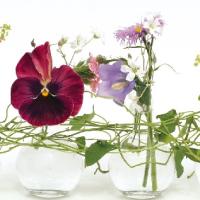 Inspirace pro aranžování květin ze zahrady…