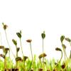 Aktuální tipy pro vaše rostliny…
