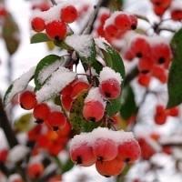 Práce v ovocné zahradě na konci zimy…