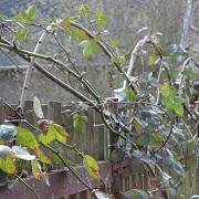Nechte svůj plot popnout plody léta a podzimu