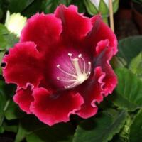 Rychlý návod na přesazování pokojových rostlin
