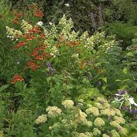 Rozkvetlá okna a zahrady