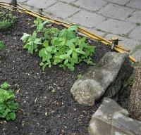 Pěstujte bylinky netradičně!