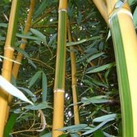 Velká letní soutěž o nejsilnější bambusové stéblo má svého vítěze!
