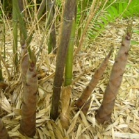 Kdo vyhrál bambusy za 4 500 Kč?