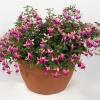 Nezapomínáte na zazimování rostlin z balkónů a teras? Už je ten správný čas!