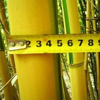 Fotografie z předávání hlavní ceny v soutěži o bambusy