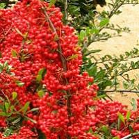 Chcete mít na vaší zahradě jedlý les? Právě teď si ho můžete vysadit!