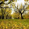 Podzimní péče o trávník krok za krokem