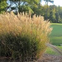 Máte zazimované okrasné trávy? Pokud ještě ne, poradíme vám!