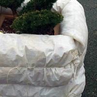 Jak správně zazimovat rostliny pěstované ve velkých nádobách na balkoně a nebo terase…