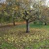 Zahradnický kalendář – listopad
