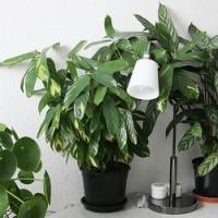 Víte, jak se v počátkem zimy správně postarat o pokojové rostliny?