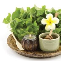 Vneste si do kuchyně exotiku, aneb byliny, které chutnají i léčí!