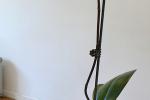 Eshop pokojových rostlin