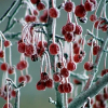 Zahradnický kalendář – prosinec