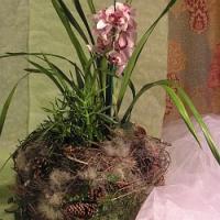 Rady a tipy na povánoční květinovou výzdobu našich domovů…