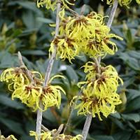 Rostliny, které již brzy na zahrádce pokvetou…