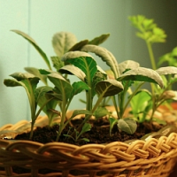 Připravujete se na novou pěstitelskou sezónu? Máme pro vás pár typů jak začít!