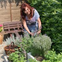 Jak postavit bylinkovou zahrádku jednoduše, bez velkých finančních nákladů a zbytečné ztráty času?