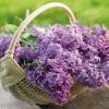 Plánujete proměnu vaší zahrady?  Nezapomeňte, že se blíží správný čas na výběr okrasných keřů!