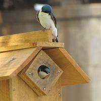 Návod na výrobu a správné umístění ptačích budek, 1. část