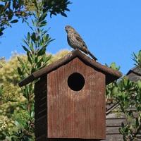 Návod na výrobu a správné umístění ptačích budek, 2. část