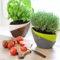 Chybí vám bylinky ze zahrádky? Pěstujte je zatím doma za oknem!