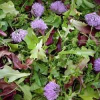 Působí na vás výkyvy počasí? Zkuste místo prášků bylinky, určitě pomohou!