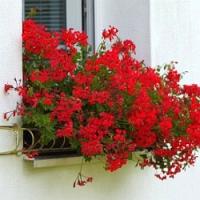 Přípravy na balkóny plné květů nesmíme podcenit!