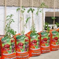 Už máte vysázená rajčata? Pokud ne, zkuste to letos netradičně!