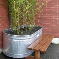 Bambusy v nádobách, na terasách či balkonech. Víte, jak je správně pěstovat?