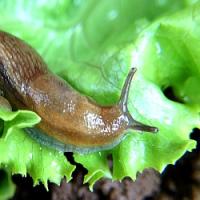 Jak na slimáky biologickou cestou? Poradíme vám…