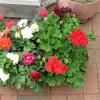 I balkónové rostliny mají své škůdce, nezapomínejme na jejich ochranu!