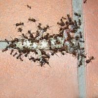 Léto je doba mravenců. Víte jak před nimi chránit sami sebe a své potraviny?