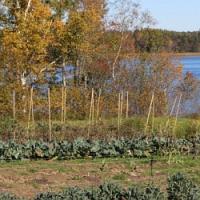 Nepodceňujte podzimní hnojení, je stejně důležité jako to na začátku vegetace!