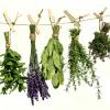 Doba pro sběr bylinek se krátí, nezapomeňte si je doplnit do své zelené lékárny!