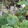 Mechy a lišejníky na ovocných stromech či keřích – ponechat a nebo zlikvidovat?