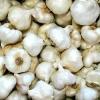 Chystáte se na výsadbu česneku? Poradíme jak ho správně namořit?