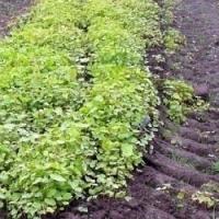Zelené hnojení – ideální způsob jak obohatit půdu na zahrádce o humus a potřebné živiny!