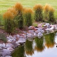 Okrasné trávy pro naši zahradu!