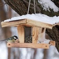 Víte, čím správně krmit ptáčky?