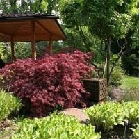 Plánujete novou zahradu? Co takhle asijskou relaxační, inspirovat se můžete v nedaleké Vídni…