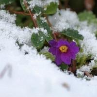 Zahradnický kalendář, aneb na co bychom neměli v únoru zapomenout!