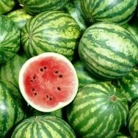 Chcete mít letos vlastní melouny? Návod na pěstování najdete na našem videu!