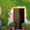 Jak správně vybrat a vysadit popínavé rostliny?
