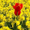Jarní výsadba cibulovin…