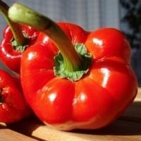 Předpěstování paprikové sadby krok za krokem…