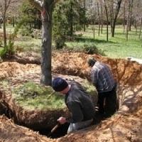 Jak správně přesadit vzrostlý strom…